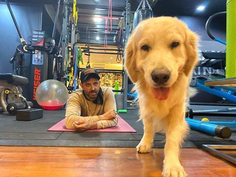 COVID-19: Hrithik Roshan's dog Zane has a message for the actor's ...