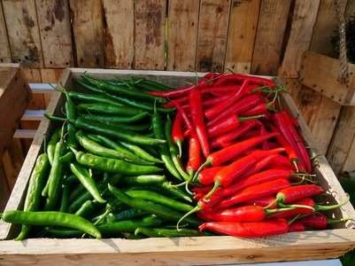 Green chilli vs. Red chilli: Which is healthier for you?