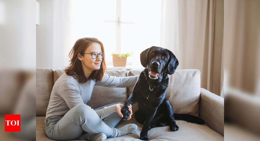 How to keep your pooch engaged indoors