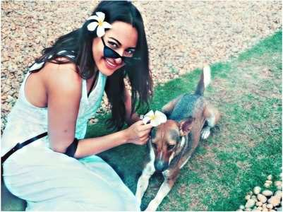 Sonakshi urges her fans not to abandon pets