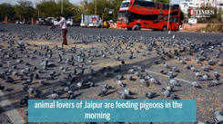 Animal lovers venture out to feed pigeons amid corona lockdown