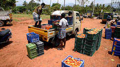 Alandurai farmers load their harvested vegetables in the trucks to send across Coimbatore