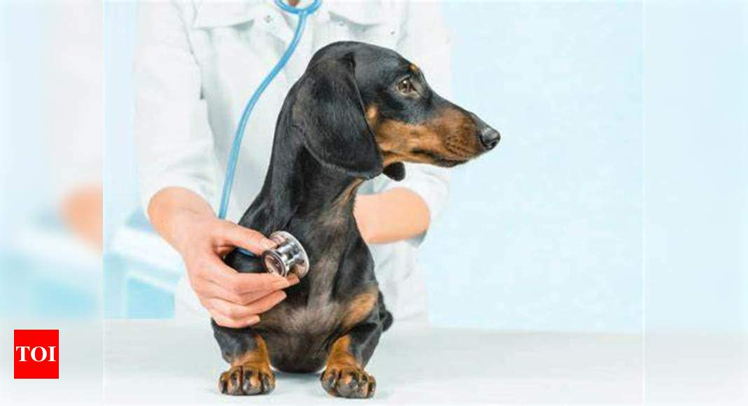 Pet care in the time of lockdown