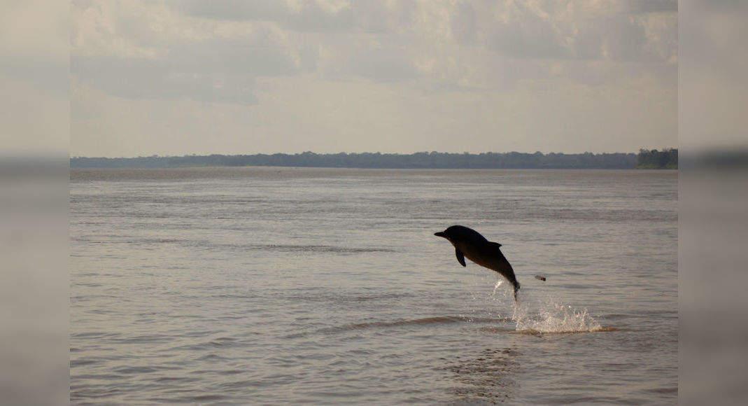Lockdown effect: Gangetic dolphins spotted at Kolkata ghats after 30 years!, Kolkata