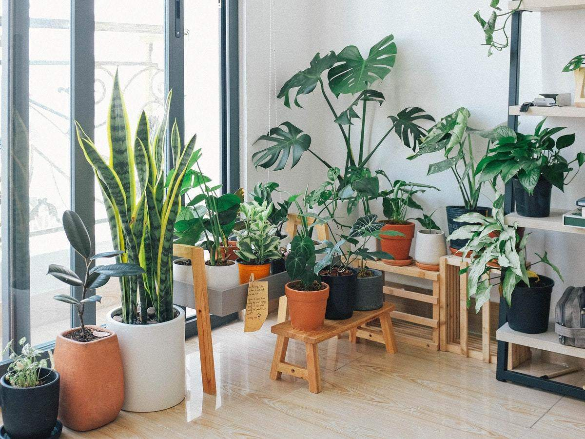 Top Products To Master The Art Of Indoor Gardening Most Searched Products Times Of India
