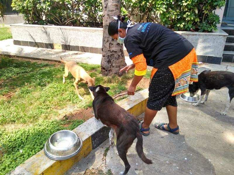 Campaign to feed stray dogs kickstarts in Bengaluru