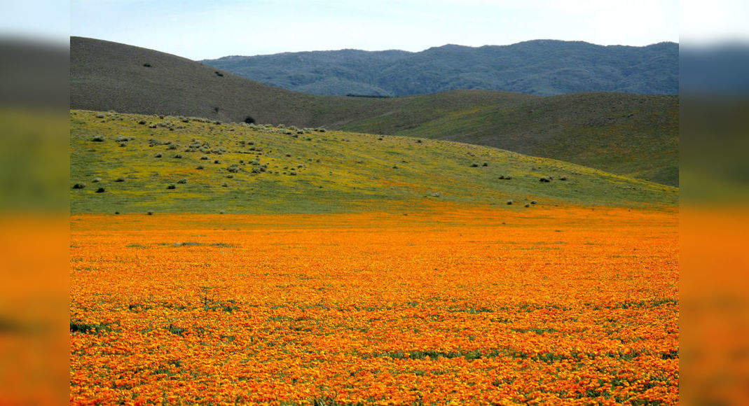 California's orange poppy bloom is so bright that it is visible from space; NASA shares pictures, California