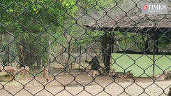 Maharajbagh Zoo inmates are summer ready