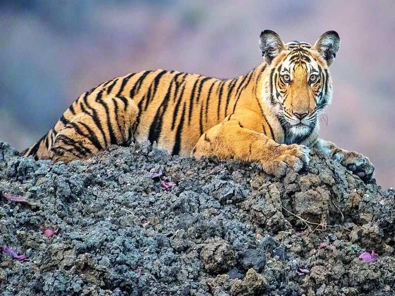 The majestic beauty of wild Karnataka comes to TV