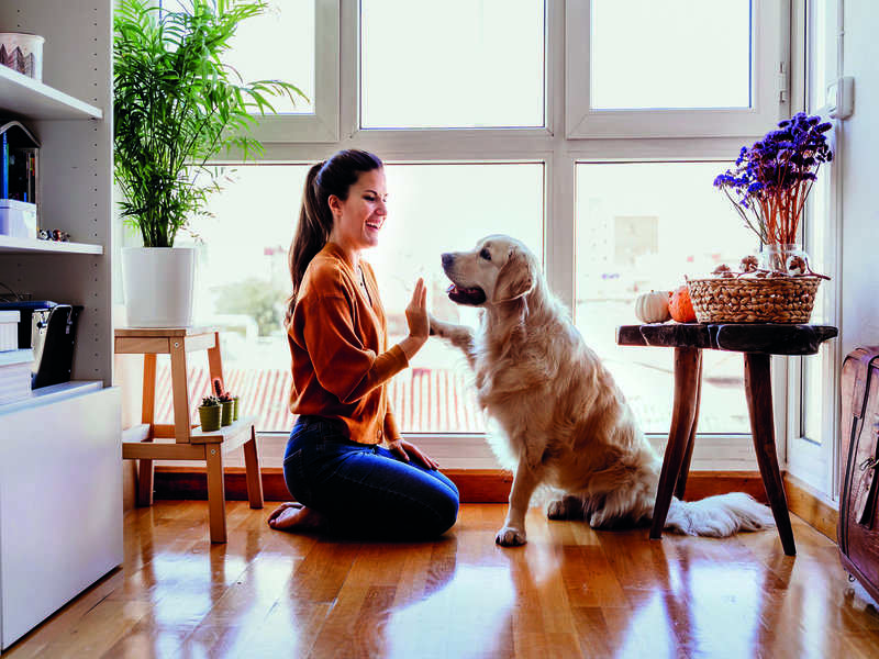 While at home, engage pets in activities without encroaching on their personal space