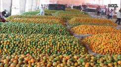 A tour of the buzzing fruit market