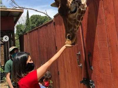 Sunny Leone feeds a giraffe in latest post
