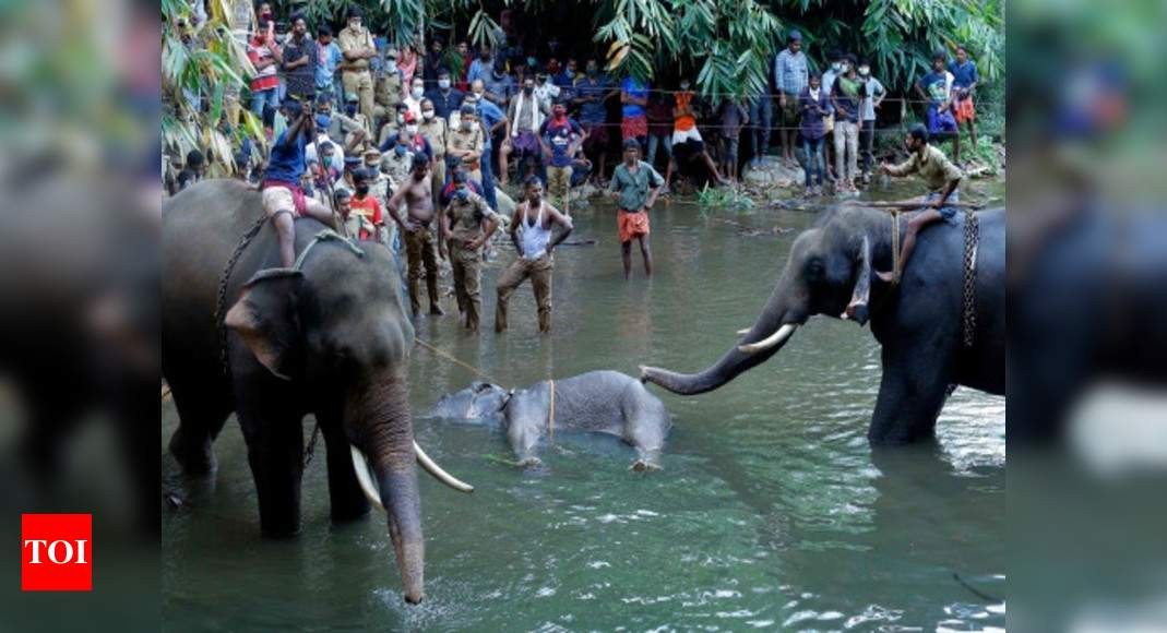 Maneka Gandhi tears into Kerala government over elephant's death, says no action taken despite frequent incidents | India News – Times of India