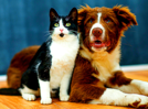 Worried about your pet's safety and happiness during lockdown? Here's what you need to do