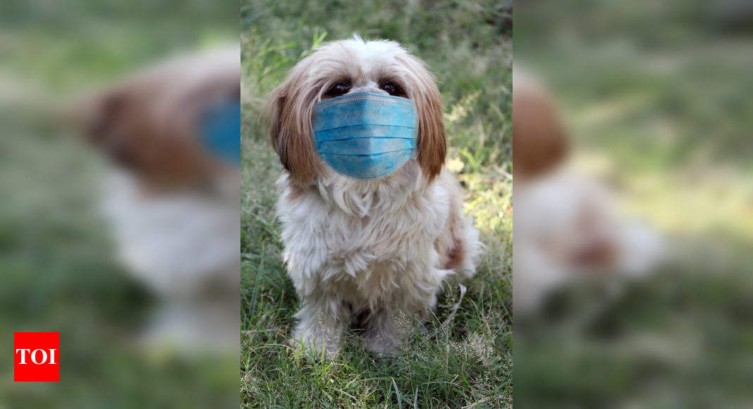 Use of pet masks: No, your pets don't need masks: Vets