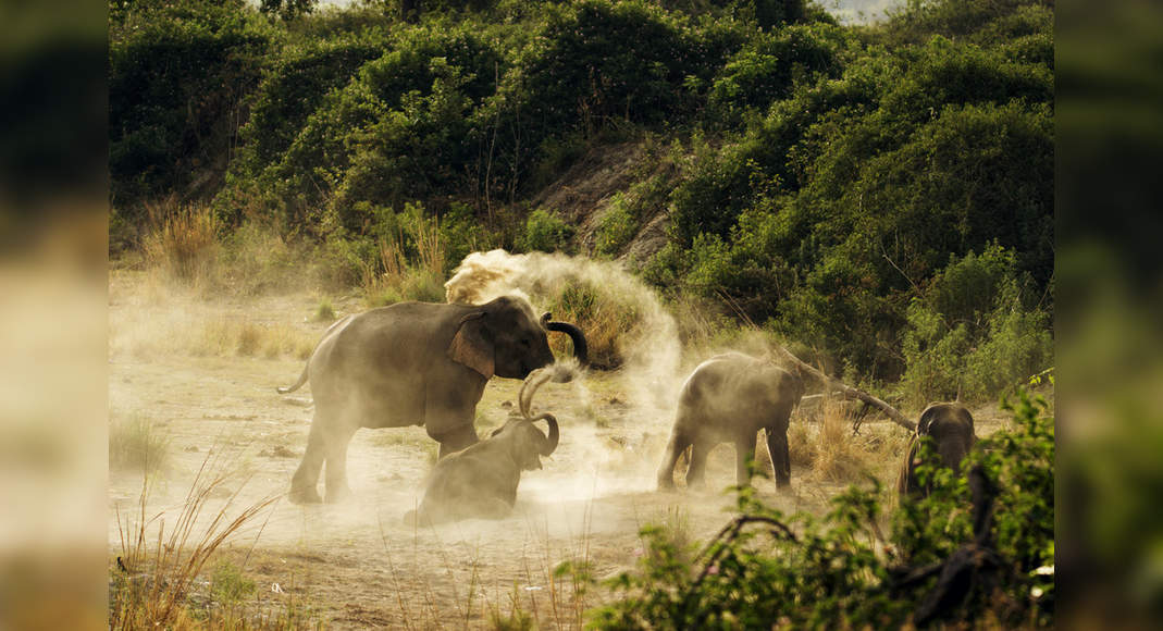 Uttarakhand: Drones capture elephants for the first time in middle Himalayas; numbers increasing in the state