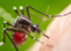 How a vaccine made of mosquito spit could help stop the next epidemic