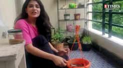 Supritha Satyanarayan's tips to have a mini herb garden