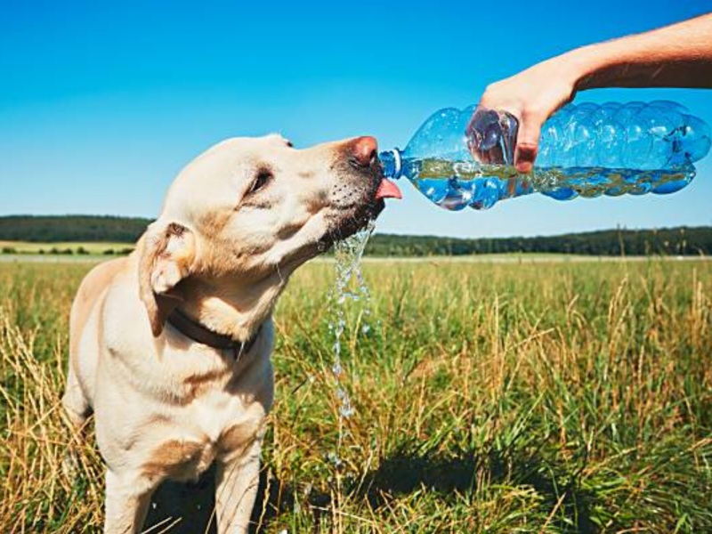 Stop! Don't ignore the signs of dehydration in pet dogs - Times of India
