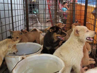 Dog Meat Festival in China Opens Despite COVID-19, Public Health Risks
