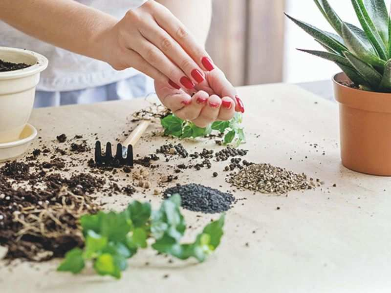 Save seeds, lead a sustainable life