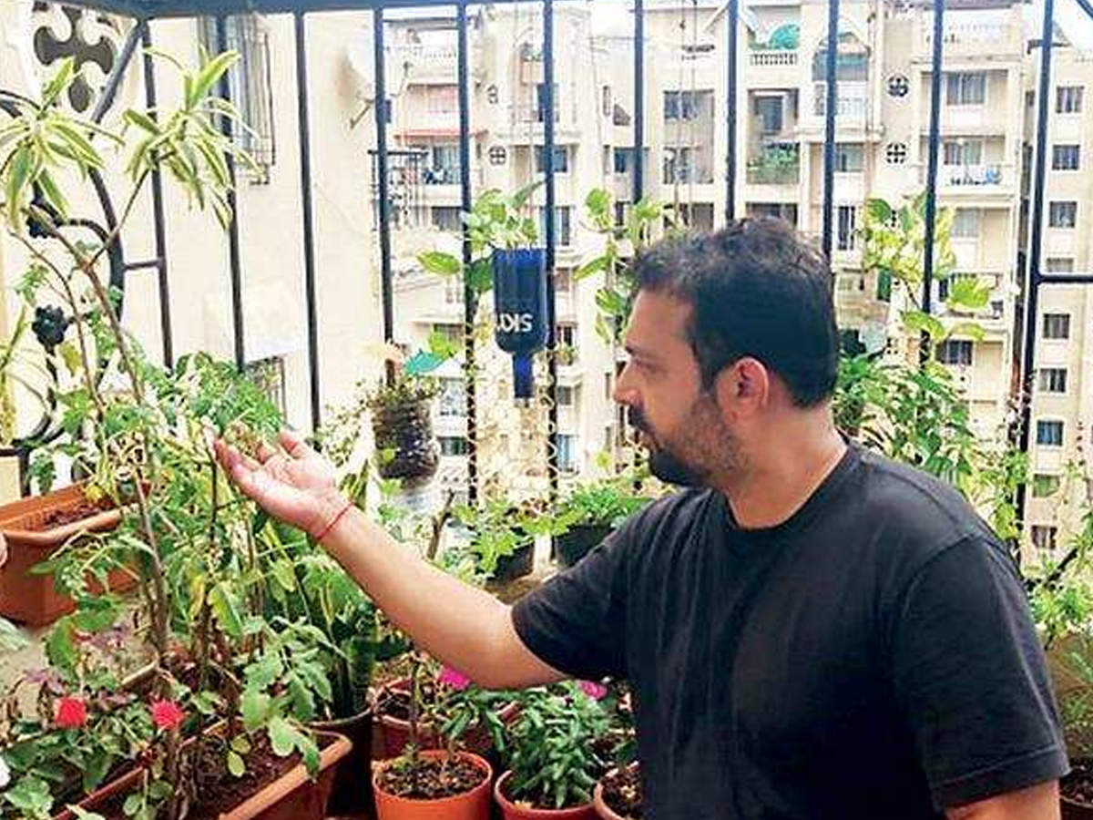 Kitchen Gardens Blossom And Grow During Lockdown Pune News Times Of India