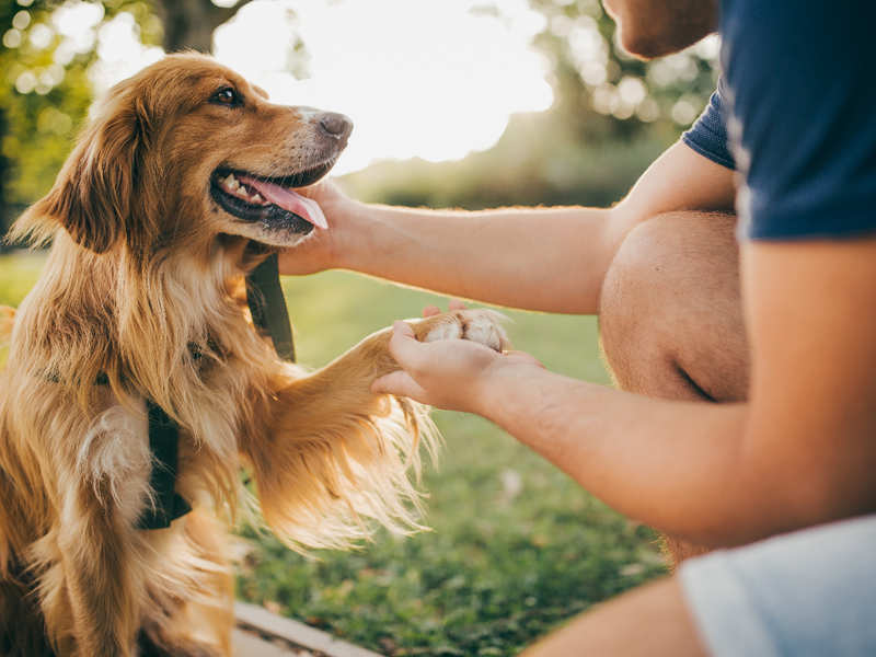 How pet boarding facilities are helping dog parents in the time of COVID-19  - Times of India
