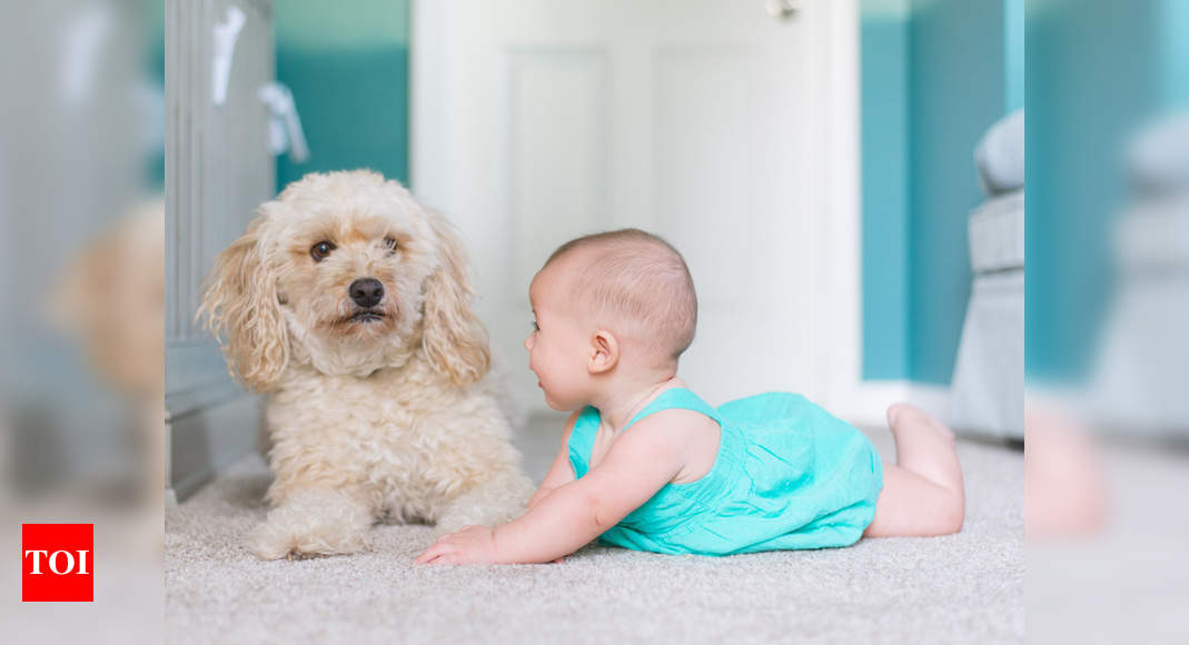 Playing with dogs can help children be better socially and emotionally