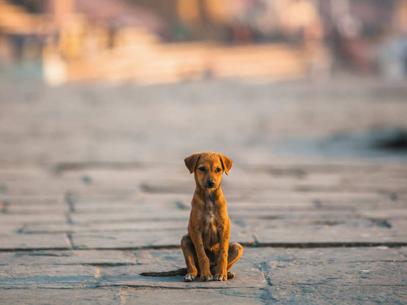 Is COVID-19 just an excuse to abandon pets?