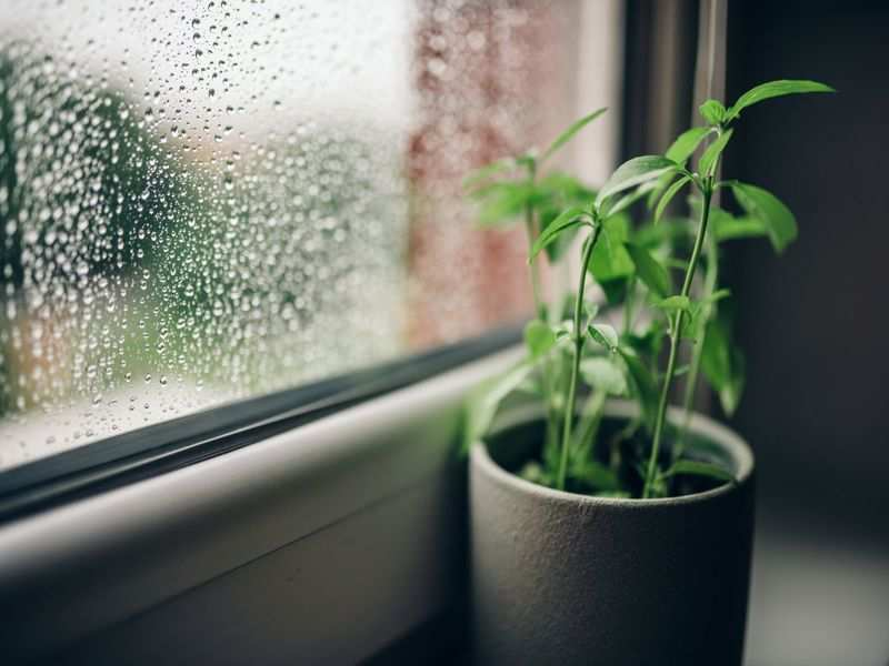 Your potted plants may need extra care during the monsoon season - Times of  India
