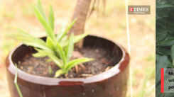 Here are some dos and don'ts for plant care during Monsoon