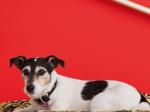 Barocoo dog bed