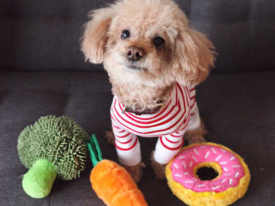 Keep these safety tips in mind before you buy a new dog toy for your furry friend