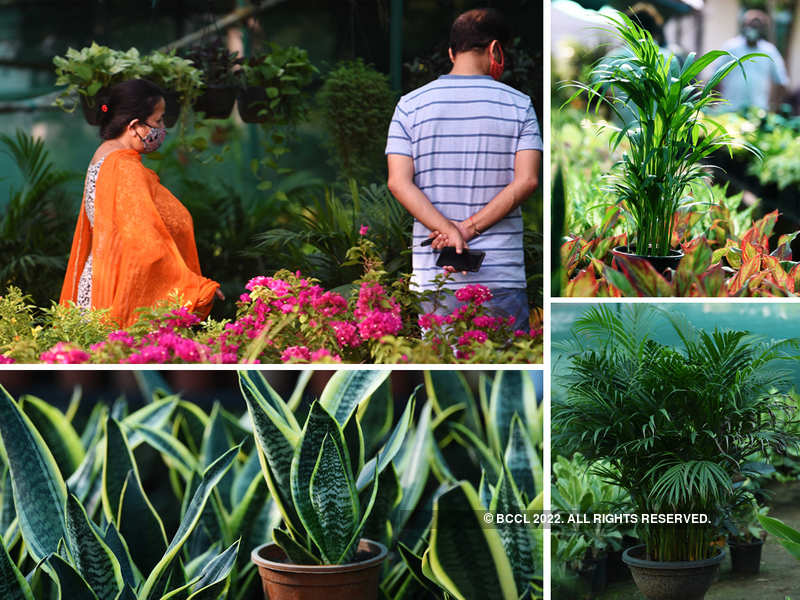Online sale of plants goes up in NCR as people turn gardeners amid the pandemic