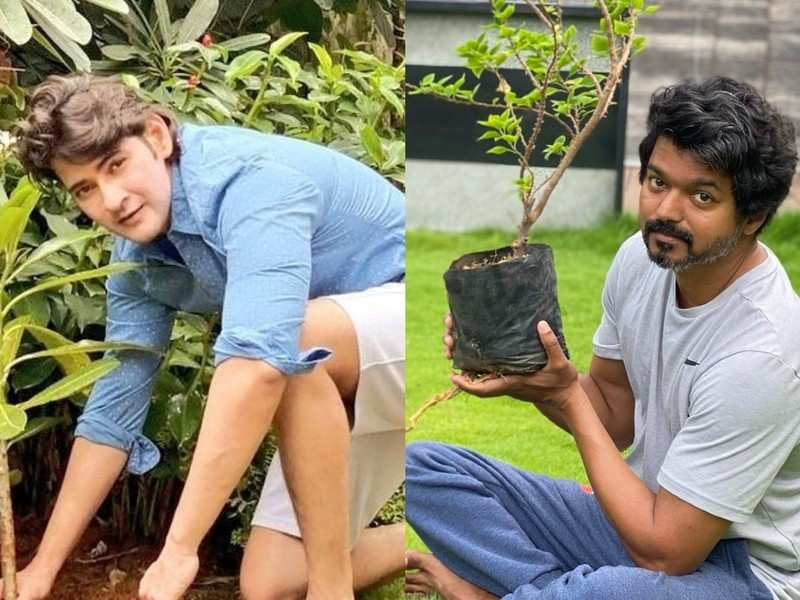 Buzz: Is Vijay and Mahesh Babu coming together for 'Thalapathy 65'?