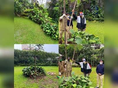 Big B plants a sapling on his mother bday