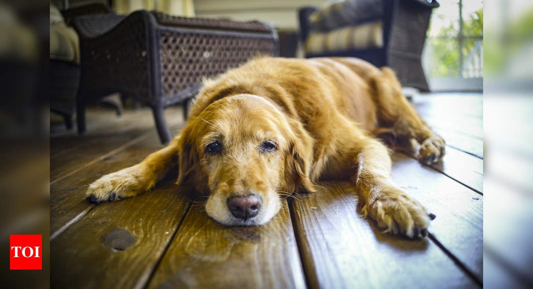 Separation anxiety in pets: As parents return to work; home-alone pets suffer separation anxiety