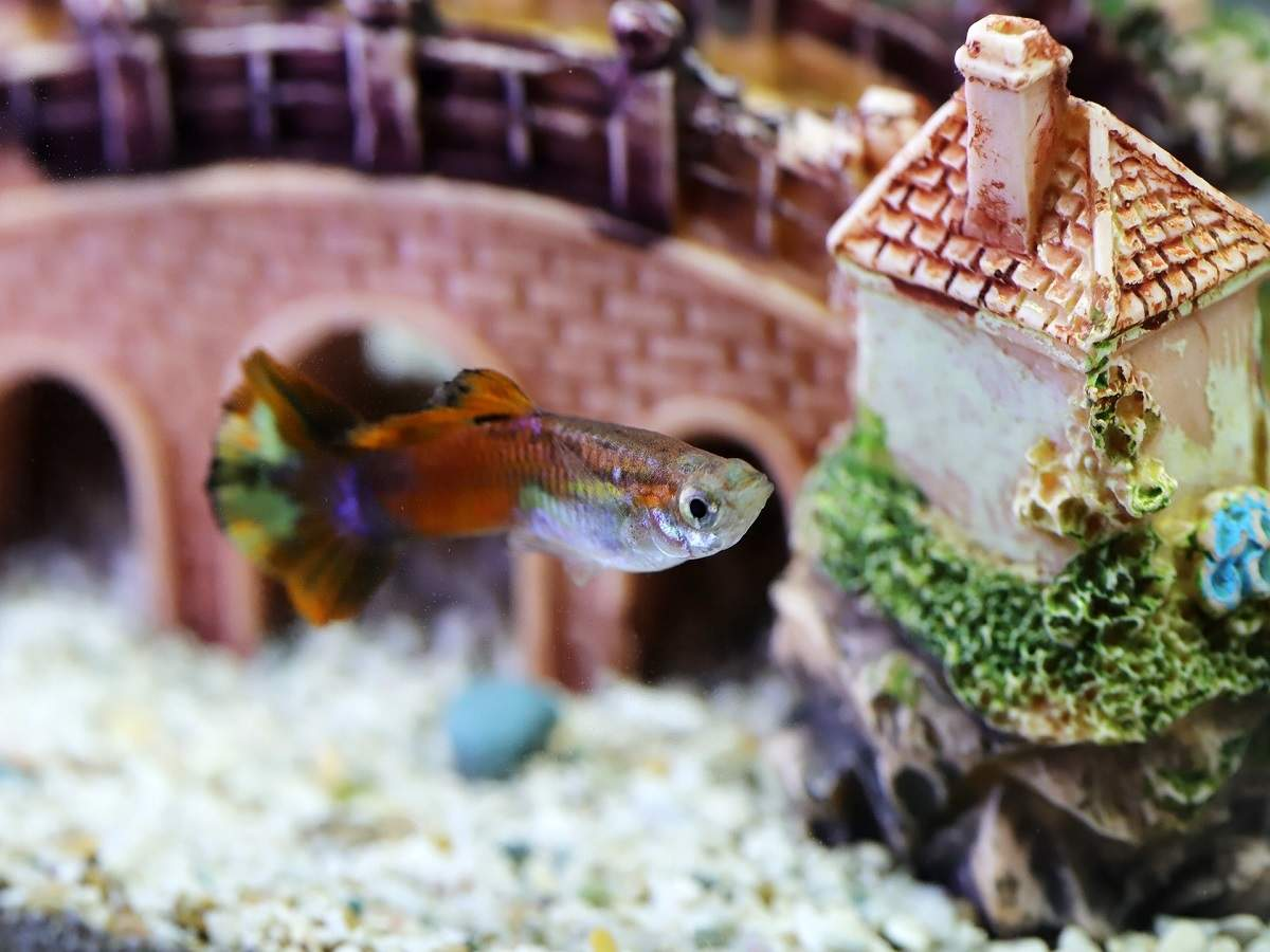 Aquarium Accessories Decorative Aquarium Accessories To Beautify Your Fish Tank Most Searched Products Times Of India