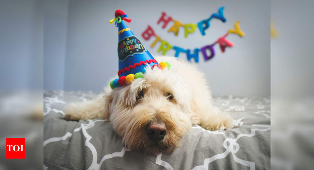 This is how you can celebrate your dog's birthday at home