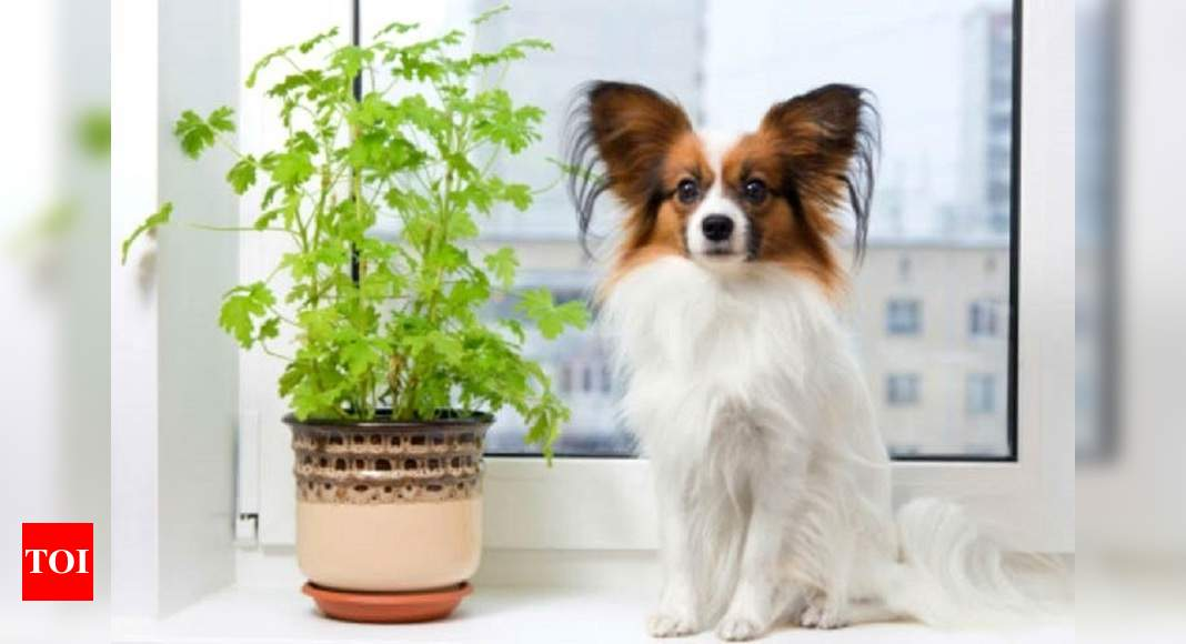 Veterinarian dr jyoti jain shares: Your guide to pet friendly plants