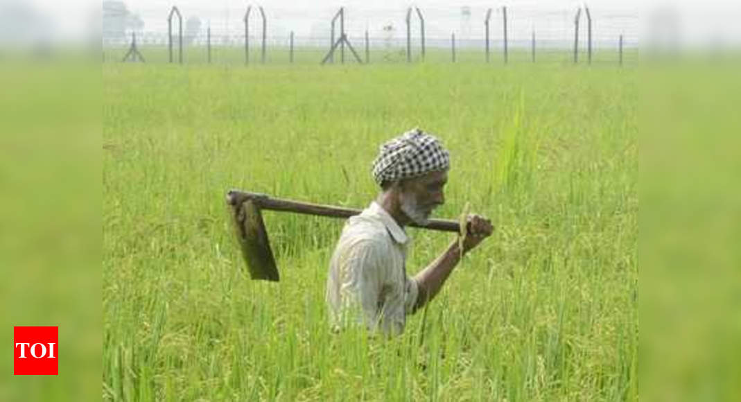 India sets target of record grain output, focus on oilseeds to reduce import bills | India News – Times of India