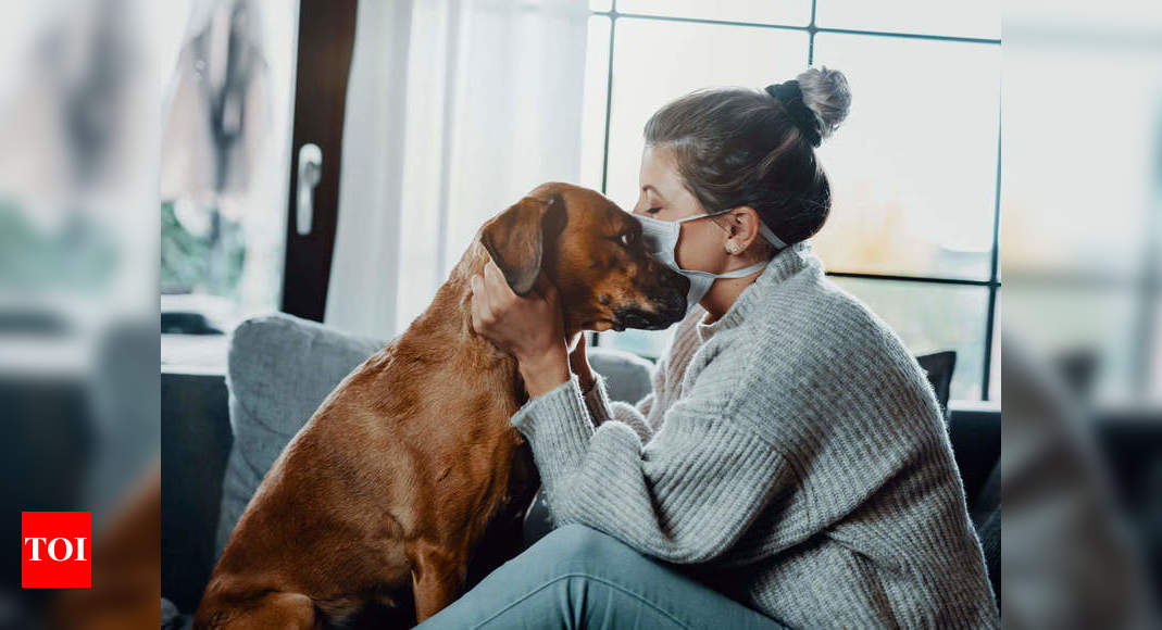 How to deal with your pets anxiety issues