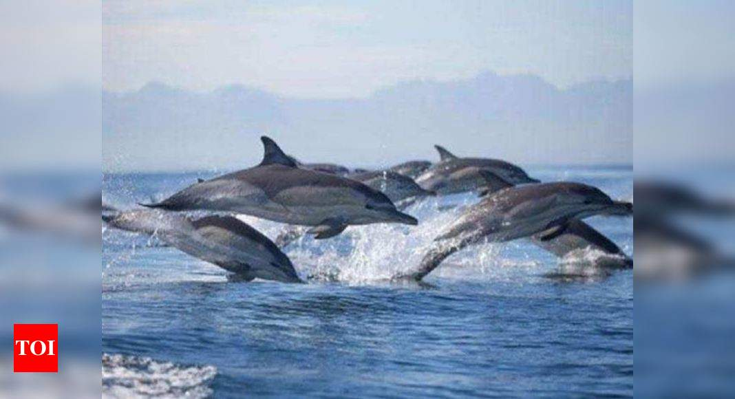 India launches Dolphin safaris in river Ganga | India News – Times of India
