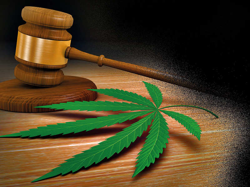Experts state that cannabis is not any more dangerous than alcohol or tobacco might be
