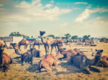 Pushkar Fair unlikely to be held this year, courtesy Covid-19