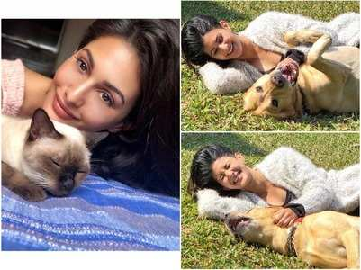 Amyra provides shelter to abandoned animals