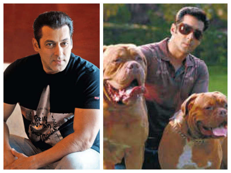 Throwback time! When Salman Khan continued shooting after a pet dog's funeral during 'London Dreams'