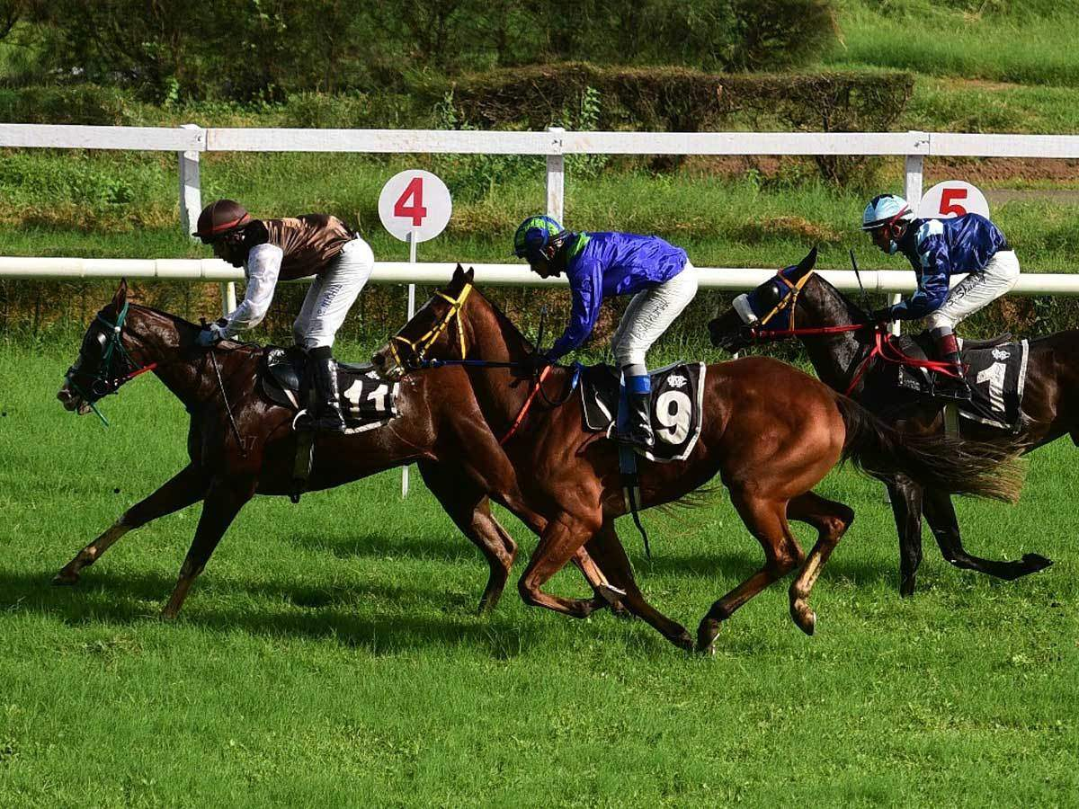 guindy race course betting websites