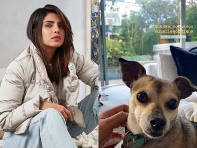 Priyanka shares an adorable pic of pet Diana