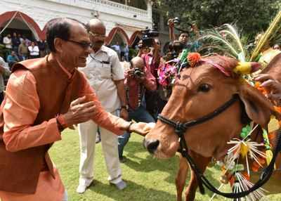 MP plans to impose cess to fund cow welfare, says CM | India News - Times of India
